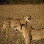 Ocho días de Safari en Kenia