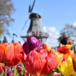 Visitar los jardines Keukenhof desde el aeropuerto