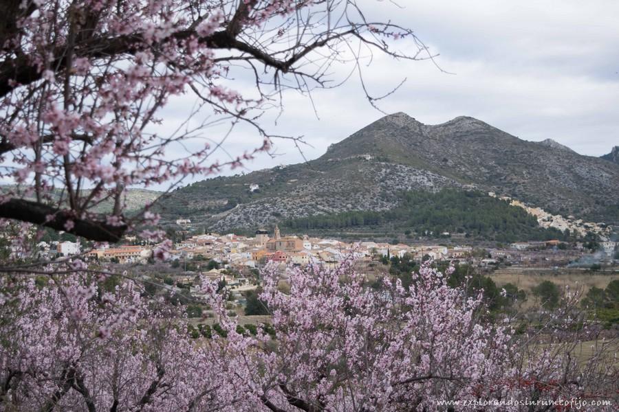 Vistas alcalali campos de almendros en flor
