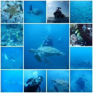 buceo isla tortuga isabela galapagos