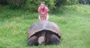 tortuga gigante galapagos