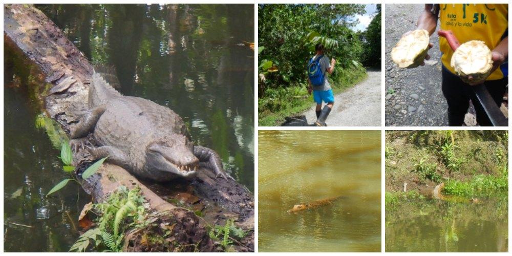 cocodrilos selva amazónica