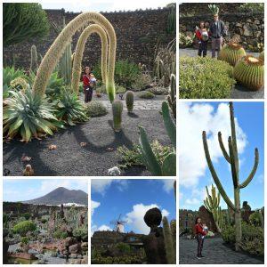 jardin cactus lanzarote