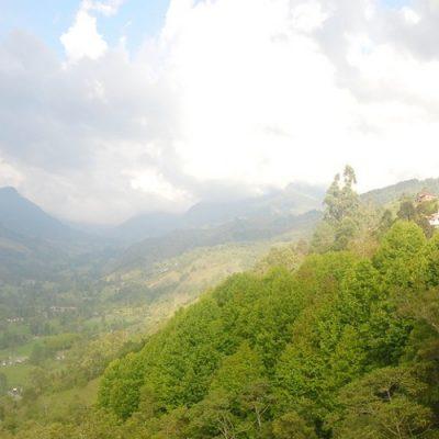 Salento y Valle del Cocora: descubriendo el Eje Cafetero de Colombia