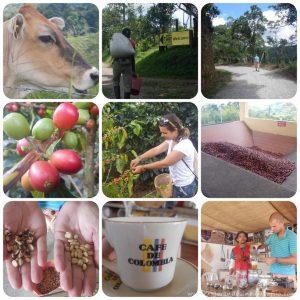 Salento coffee tour